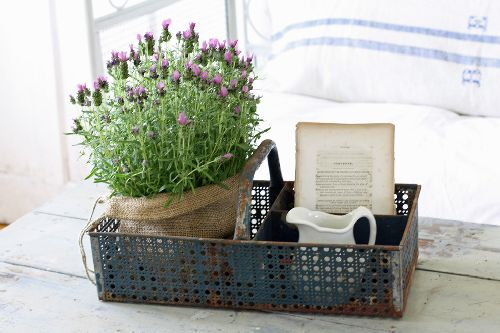 decoratie lavanda