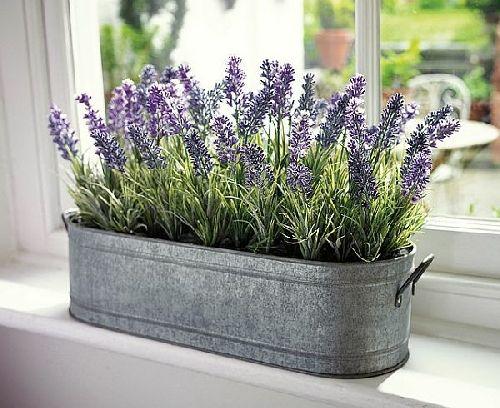 lavanda-jardiniera-tabla