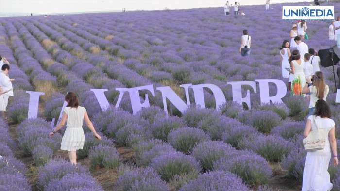 festival lavanda lavender fest